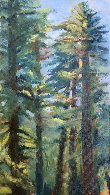 Redwoods, Armstrong Woods #1, Guerneville CA